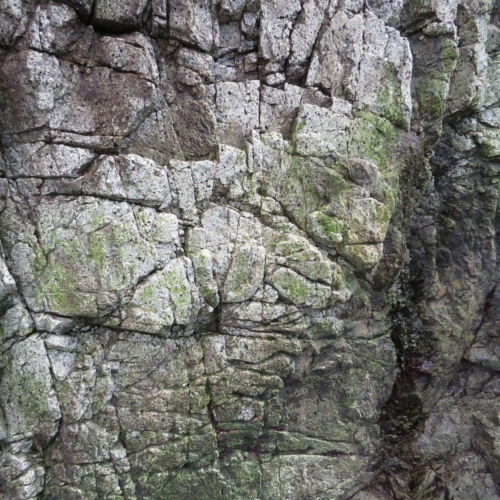 Tofino Rocks